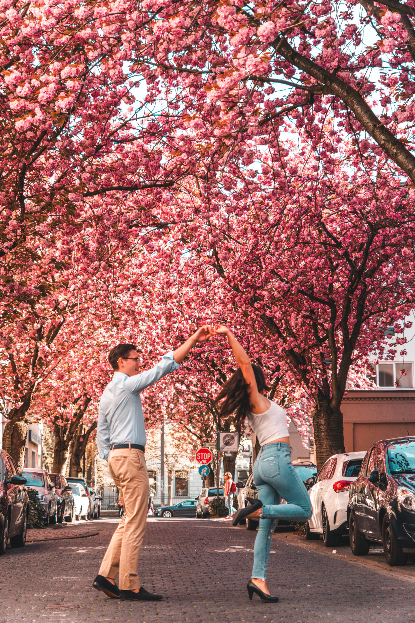 A Guide to Bonn Cherry Blossom Germany