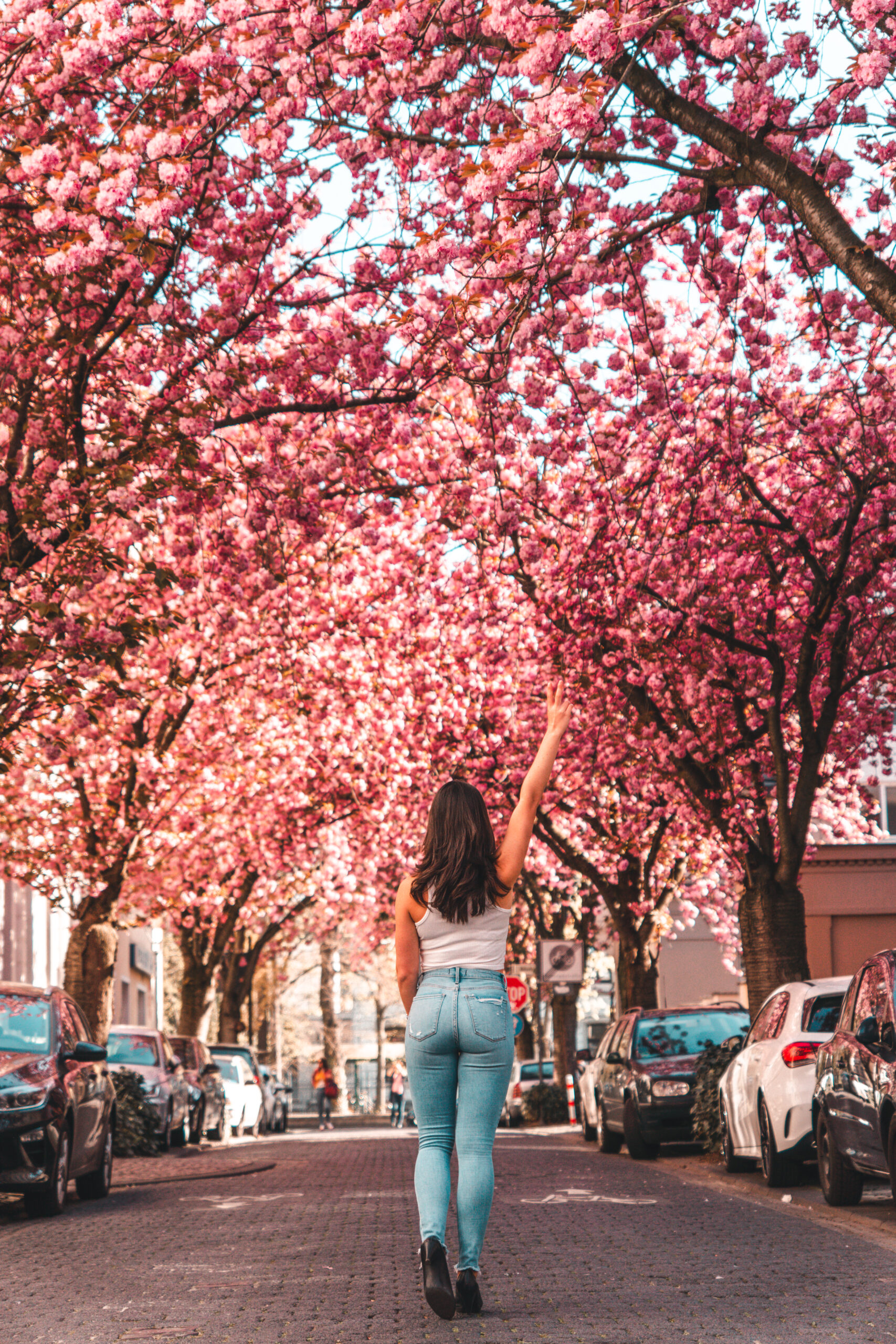 Bonn Cherry Blossom | When, where, and everything you need to know